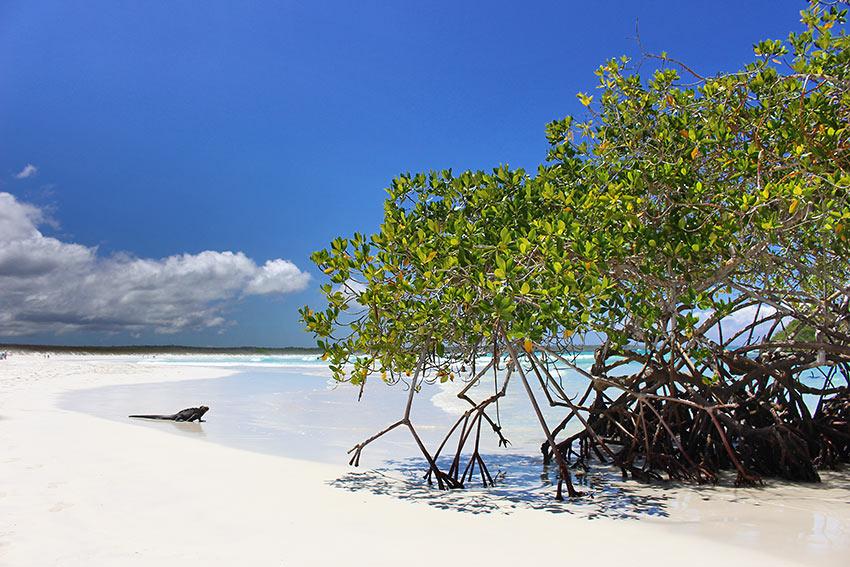Tortuga Bay, Galapagos
