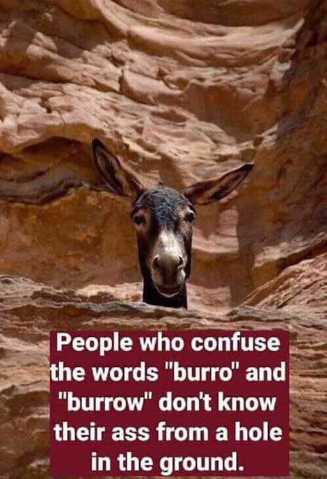 Don's Puns: Burro vs Burrow