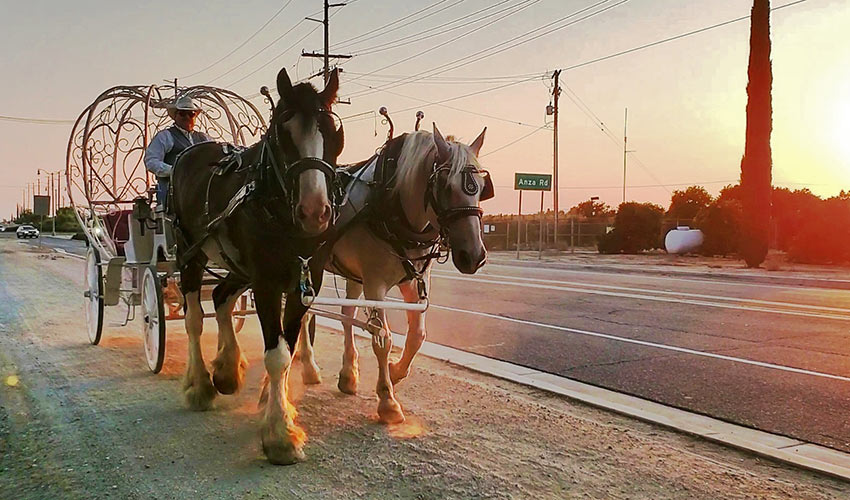 horse and carriage ride, South Coast Winery