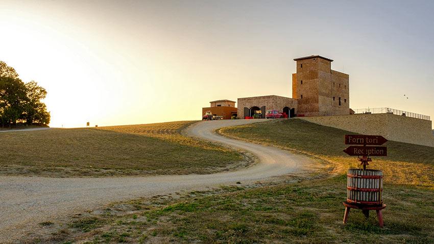 MonteRosola vineyards