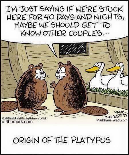 origin of the platypus