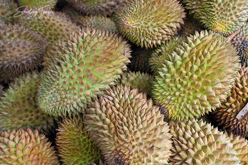 durian from Davao City, Philippines