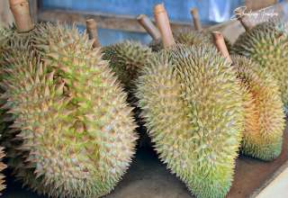 sharp spikes form the durian's outer covering