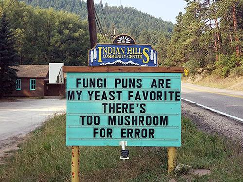 Don's Puns: Fungi Puns