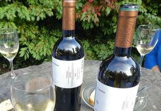 Monterosola organic wines