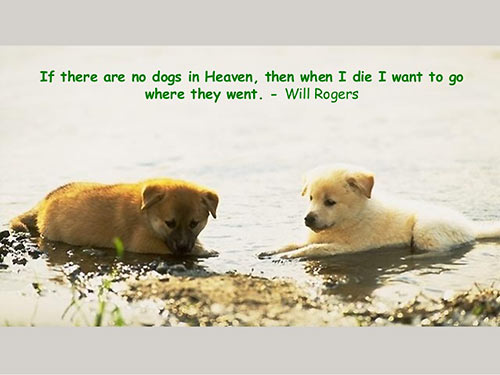 Parting Shots: Dogs in Heaven