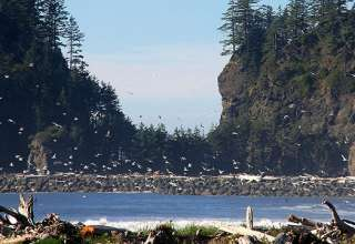 La Push. Olympic Coast, Washington