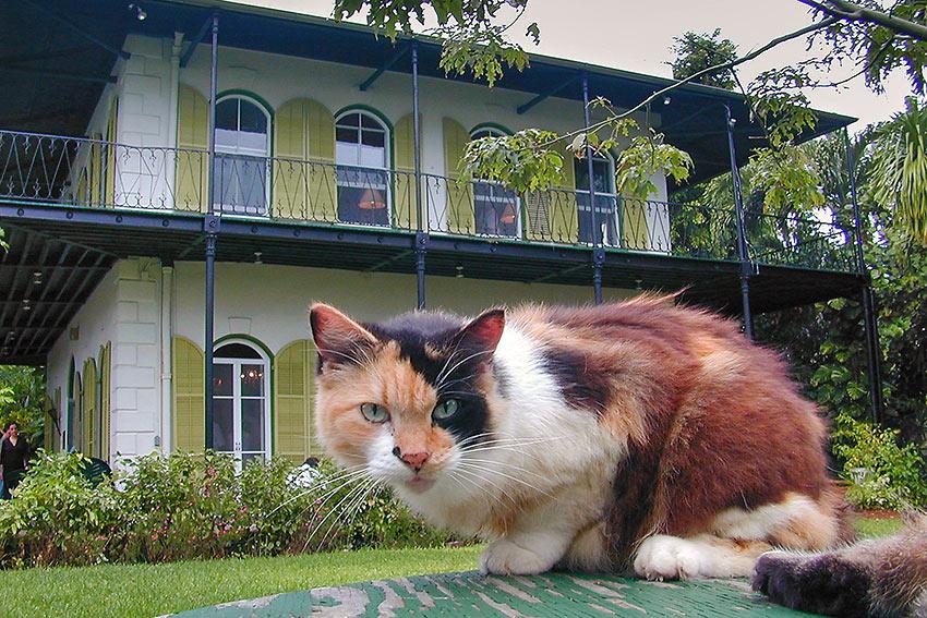 Hemingway's House, Key West