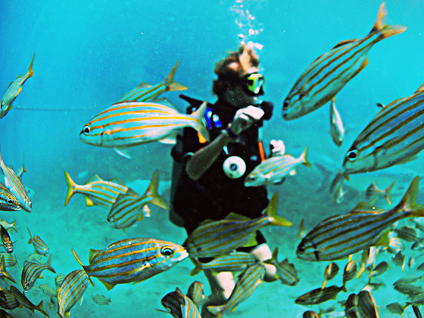 snorkeling with fishes at the Sea Aquarium