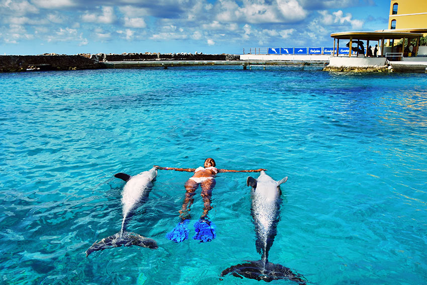 sunbathing with dolphins at the Sea Aquarium, Curacao