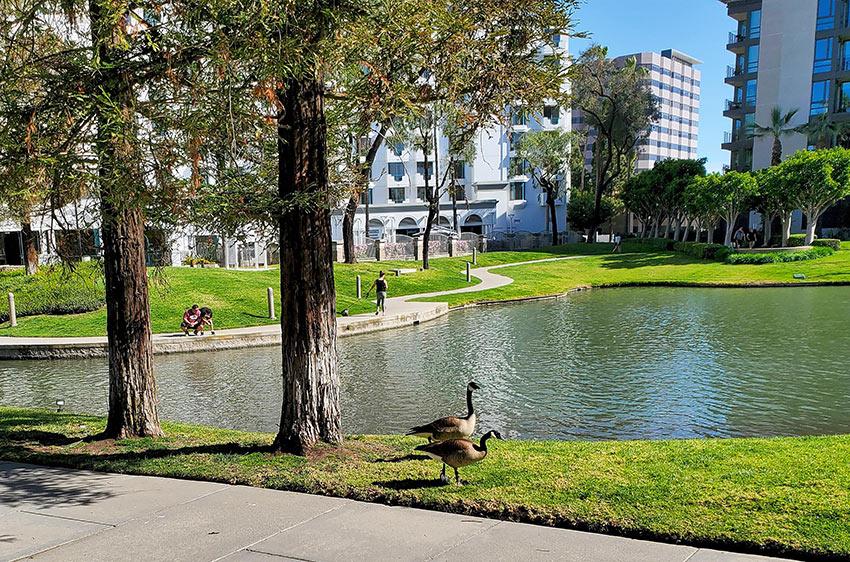 he lake near Avenue of the Arts Hotel