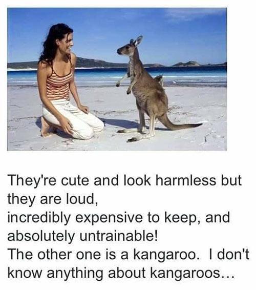 Parting Shots: Kangaroos
