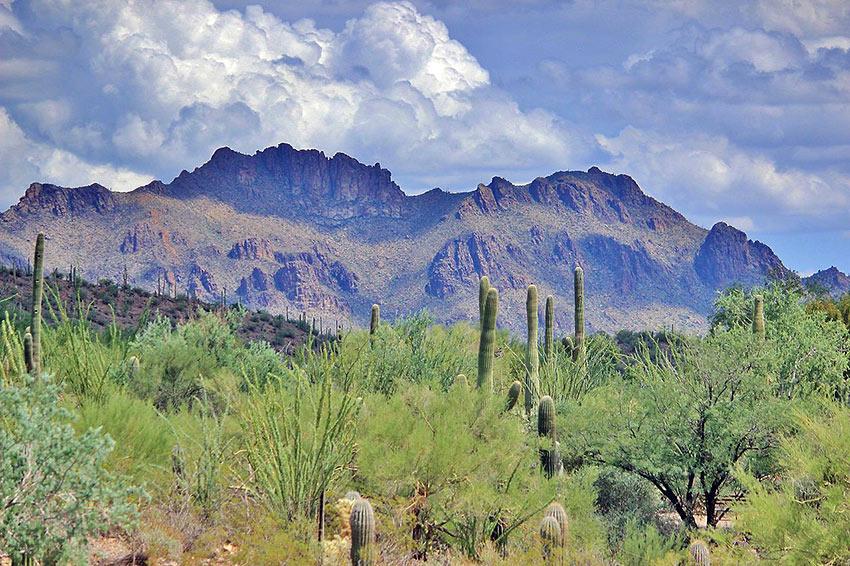 Sonora Desert Museum, Tuscon, Arizona